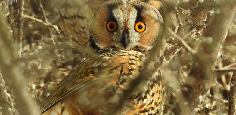 October 24th: About Owls Presented by the Howell Nature Center (for ages 3-11)